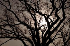 Moonlit Oak Tree. Old oak tree lit by the moon Stock Images
