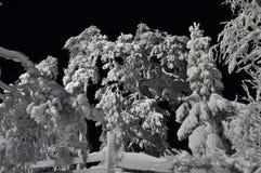 Moonlit scena Zdjęcie Royalty Free