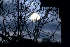 A moonlit silhouette of a tree branch. Royalty Free Stock Photos