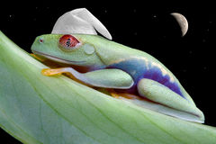 Moonlit sleepy frog. A red-eyed tree frog is sleeping wearing a night bonnet under the moon and stars Royalty Free Stock Photos