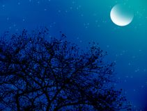 Moonlit starry night royalty free stock image