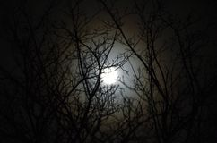 Moonlit tree. Picture of moon through trees in winter Royalty Free Stock Photos