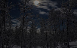 Moonlit trees v1 Royalty Free Stock Photos