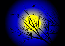 Moonnight Стоковые Фото