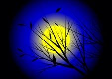 Moonnight Stock Photos