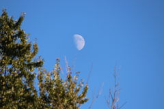 Moonrise över träd Royaltyfri Bild