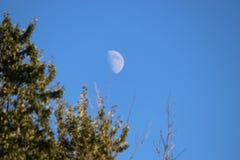 Moonrise über Bäumen Lizenzfreies Stockbild
