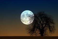 moonrise Lizenzfreies Stockbild