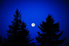 Moonrise on the Blue Ridge Parkway. Between two pines trees Royalty Free Stock Photos