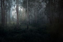 Moonrise at dusk. Moonrise in a misty forest at dusk Royalty Free Stock Photos