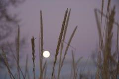 Moonrise en bladen Stock Foto