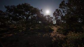 Moonrise med flyttningskugga av träd arkivfilmer