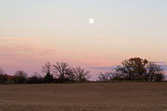 Moonrise over the harvested corn field Royalty Free Stock Photo