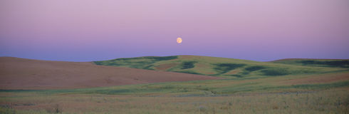 Moonrise over pea fields Royalty Free Stock Photo