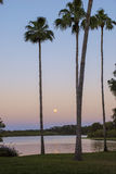 "Moonrise and palm trees at Sunset. The moon rising during ""Magic Hour"" glow of sunset, between palm trees over reflective lake.  Seven Seas Lagoon at Disney Stock Photo"