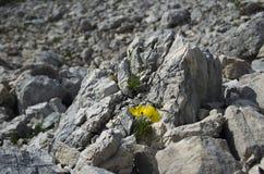 Moonscape i bergen III , blomma, Julian Alps Arkivbild