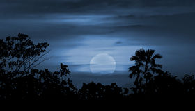 Moonscape Silhouette Ilustration. Moonscape collage illustration scene with tropical vegetation and moon in blue cloudy background stock photography