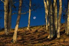 Moonset долины Cataloochee Стоковое Изображение