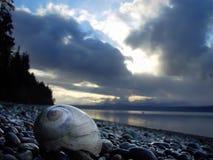 Moonshell sur la plage image stock