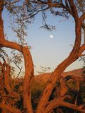 Moonshine Desert In Tree Branch Stock Images