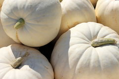 Moonshine pumpkins Royalty Free Stock Image