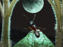 Moonwalk of ant Stock Photo