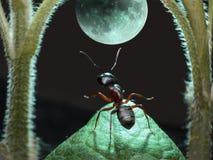 Moonwalk of ant stock photo