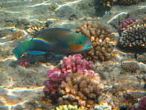moonwrasse Royaltyfria Foton