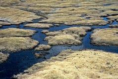 Moor on Altiplano in Bolivia,Bolivia Stock Image