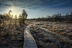Moor land in winter Royalty Free Stock Photo