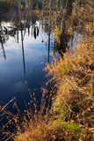 Moor pond with dead standing trees Royalty Free Stock Photos