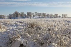 Moor with tufts of grass in snow Stock Photo