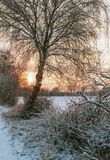 Moor in winter. View of a snowy moor at sunset Stock Image