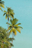 Moorea海滩 库存图片