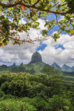 Moorea franska polynesia Royaltyfri Fotografi