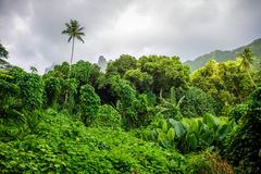 Moorea island jungle and mountains landscape Royalty Free Stock Images