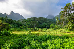 Moorea island jungle and mountains landscape Royalty Free Stock Image