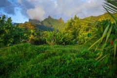 Moorea island jungle and mountains landscape Royalty Free Stock Photos