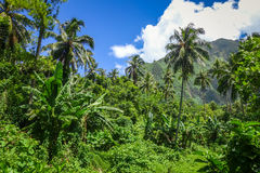 Moorea island jungle and mountains landscape view Royalty Free Stock Images