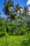Moorea island jungle and mountains landscape view Royalty Free Stock Photo