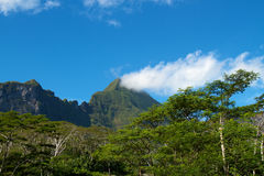 Moorea island Stock Photos