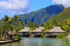 Moorea, Polinesia francese Immagine Stock