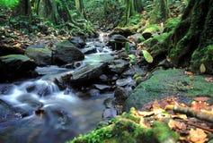 Moorea Rainforest Cascade Stock Photos