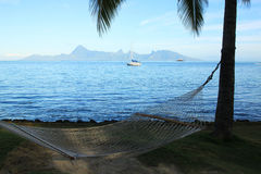 Moorea View from the Hammock Royalty Free Stock Images