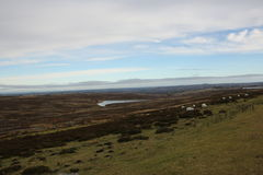 Moorerland View. High up on the Stanhope moors looking north with reservoir and sheep grazing in the heather. blue sky and clouds Royalty Free Stock Images