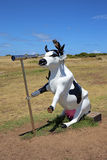 Moorine Marauder - Funny Pirate Cow Royalty Free Stock Photo