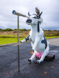 Moorine Marauder Funny Pirate Cow Cape Leeuwin Lighthouse. Moorine Marauder Funny Pirate Cow Leeuwin Lighthouse Augusta Western Australia wa stock photography