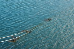 Mooring rope in the water with seaweed in the fishing harbor. stock photography