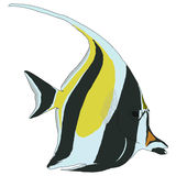 Moorish Idol Vector Illustration. On white background Royalty Free Stock Photo
