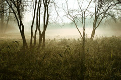 Moorland. Early in the morning in the moorland Royalty Free Stock Images